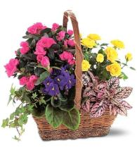 Blooming Basket<br>TF191-1