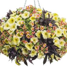 Outdoor Patio Planters : Denver, CO Florist : Same Day Flower Delivery for any occasion