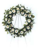 White Diasy Wreath<br>CTT 4-31