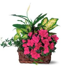 Azalea Attraction Basket<br>TF126-1