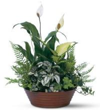 Basket  Garden<br> Mixed Green Plants